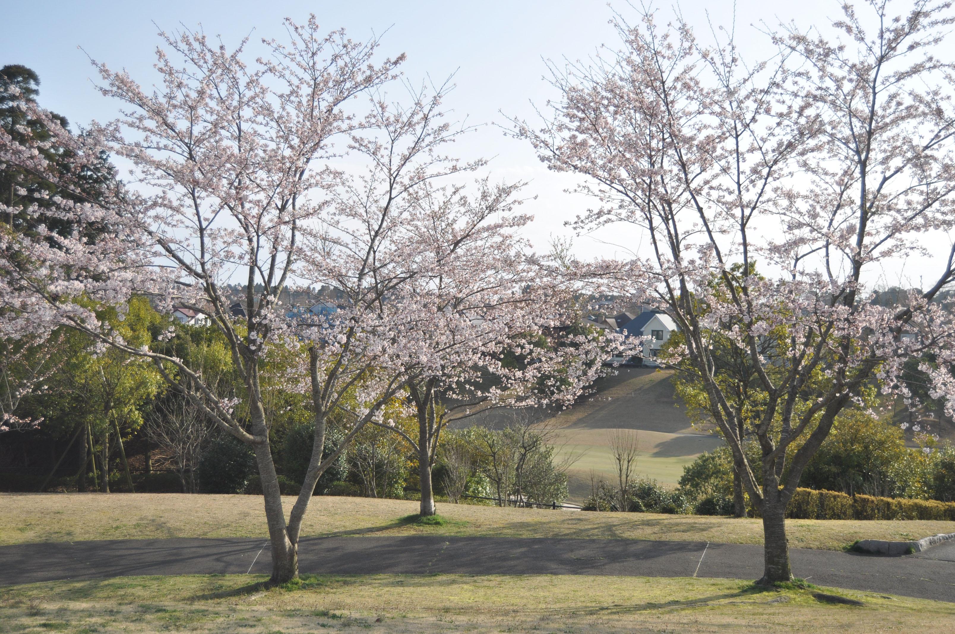 さくら公園DSC_0055