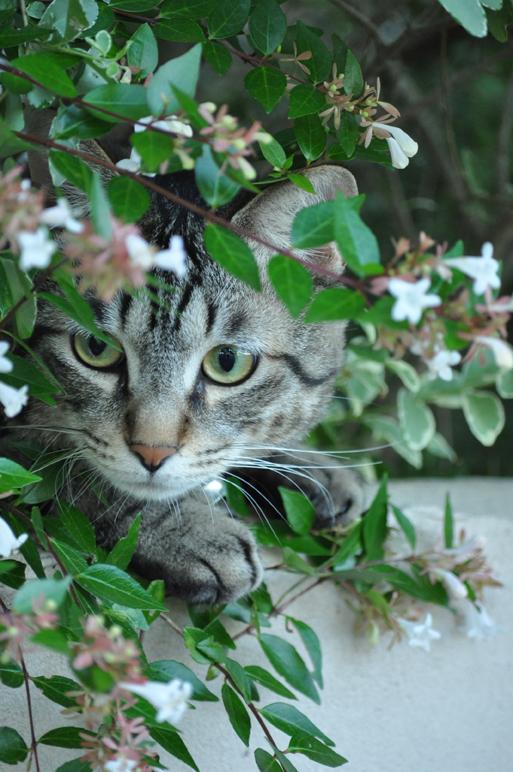 花壇の中のネコDSC_0005©K.ITO