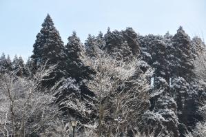 雪の日の季美の森もまた、美しい