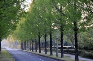 季美の森の朝