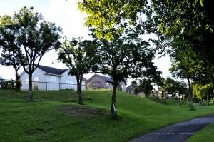 早朝ゴルフ3