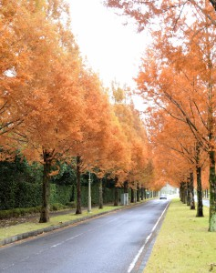 11月29日雨の季美の森
